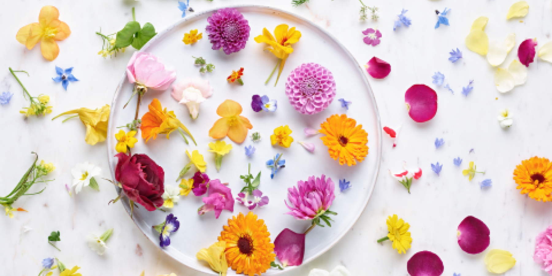 Award winning edible flowers photographed by Neil White Photographer