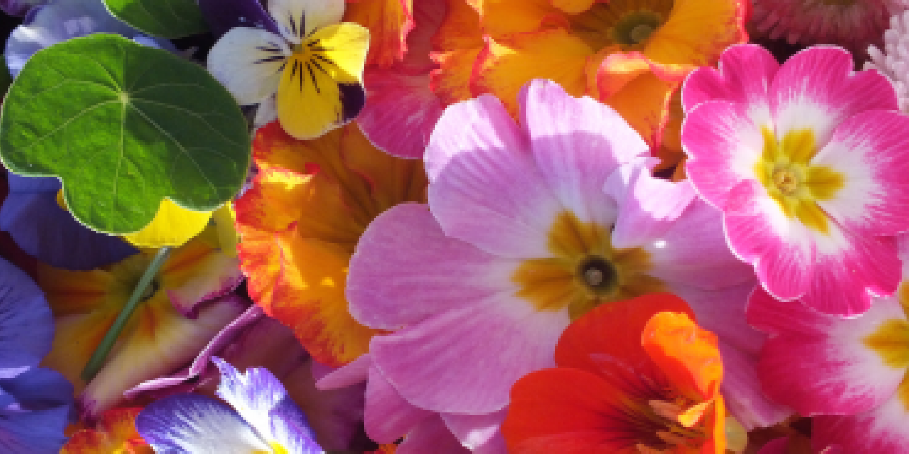 Buy edible flowers. Buy organic edible flowers. Edible flowers