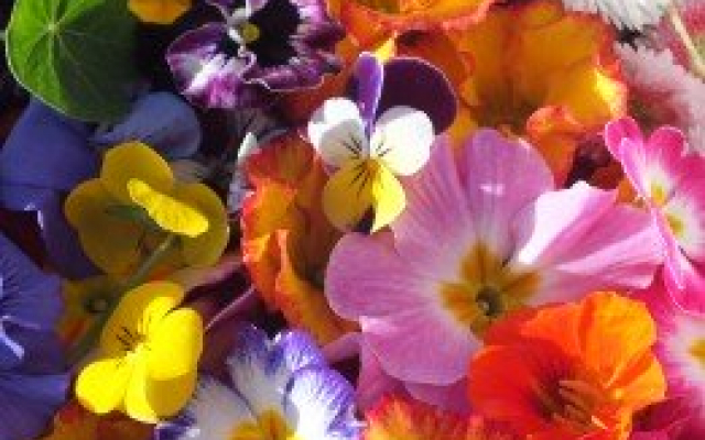 Buy Edible flowers from Maddocks Farm Organics