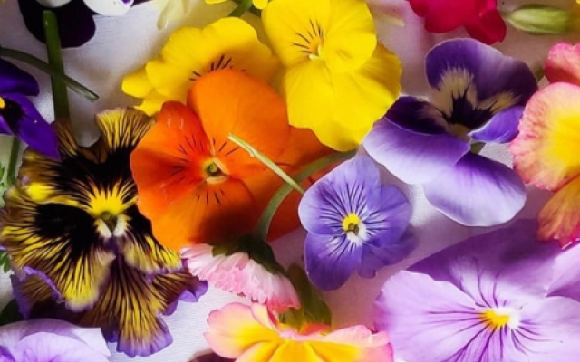 Buy edible viola flowers