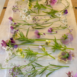 Buy edible flowers for pressing