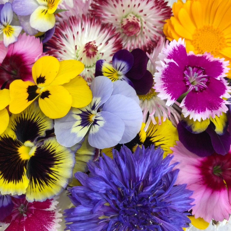 Edible flowers by post