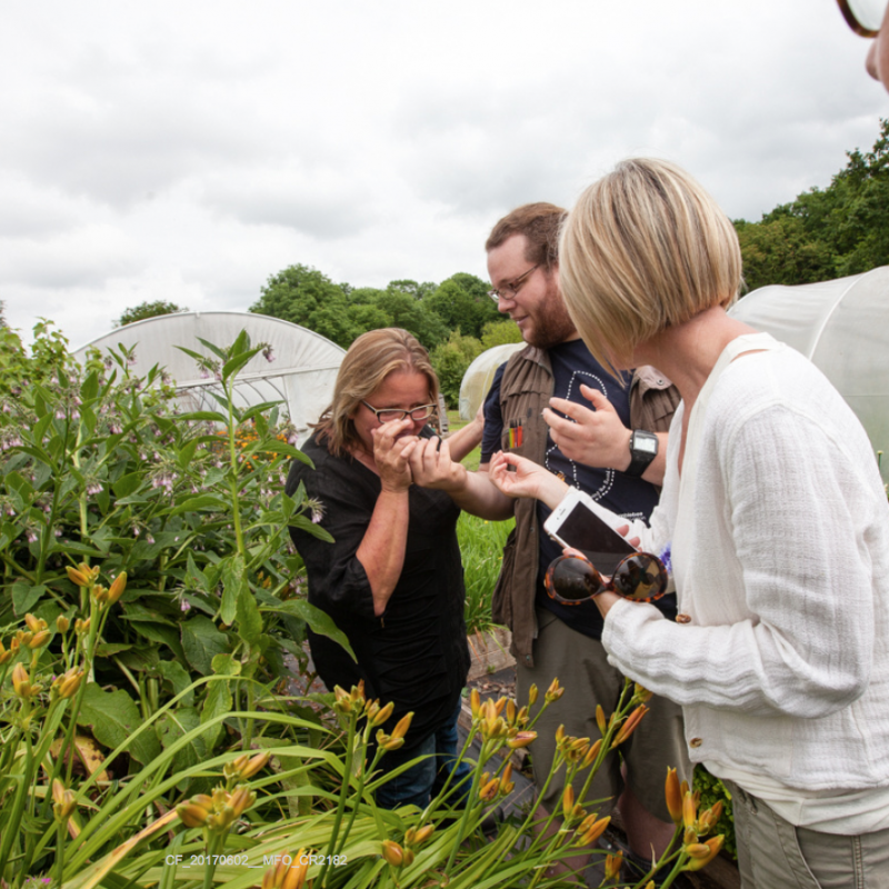 Bumble Bee Conservation and Identification Course