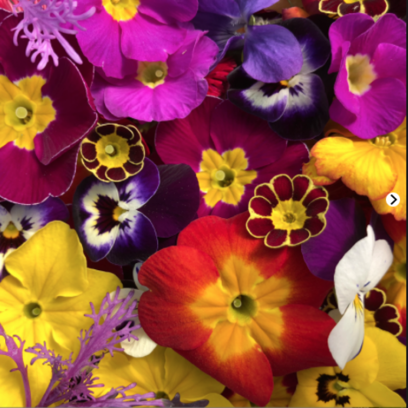 Buy edible flowers for easter