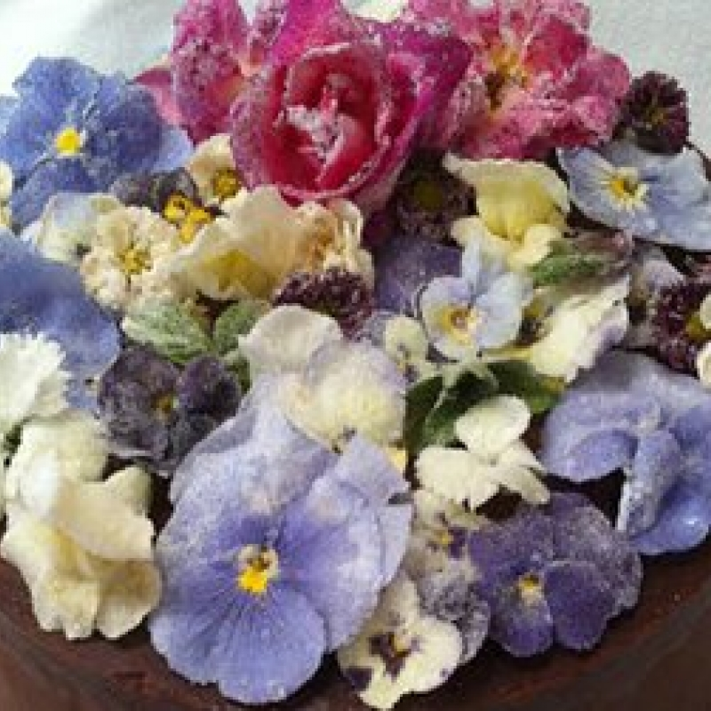 Buy edible pansies. Edible flowers for cocktails and drinks. Buy pansy flowers..