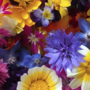 July Edible Flowers
