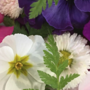 March Edible Flowers